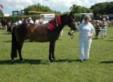 NF bedste hest og skuets bedste model ved Nibe Dyreskue
