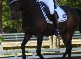 Elmholts Bravur bliver B-pony