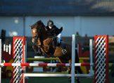 Danish Daisy B-pony i spring