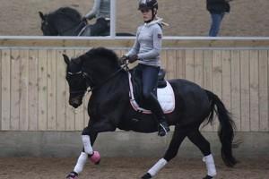Lundemarksgaards Lady In Black