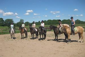 New Forest ponyer forberedelse til show paa det Fynske Dyrskue 2011