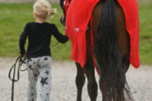 dig_med_pony