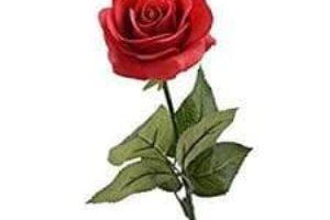 nf_rosenparade_rose